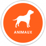 univers animaux