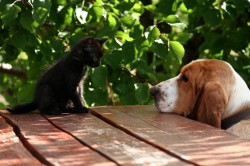 aliments chiens comptoir nature