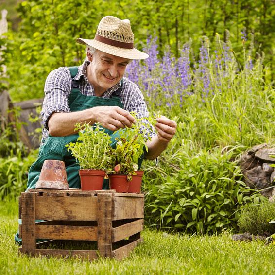 univers jardin comptoir nature